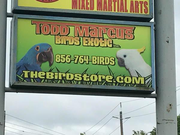 todd-marcus-birds-2