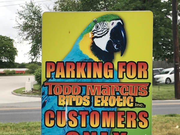 todd-marcus-birds-3