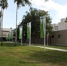 USF Health Outdoor Flags