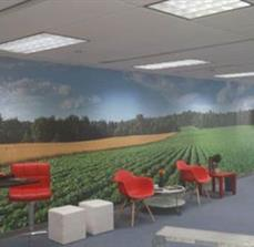 Large Wall Graphics